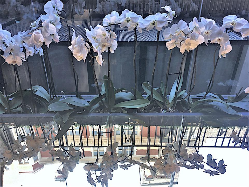 Minotti Margaret street flower display